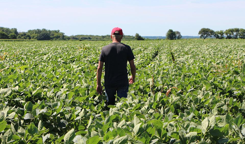 """Farmer Terry Davidson walks through his soy fields July 6, 2018, in Harvard, Illinois, the same day China imposed retaliatory tariffs aimed at the US soybean market. - Davidson, 41, is a fifth generation farmer, a Democrat among mostly Republicans. He expects to be farming long after the US-China trade tariffs become a distant memory. """"We've survived since the 1800s and we're still going. So, I think we'll keep going,"""" Davidson says. (Photo by Nova SAFO / AFP)        (Photo credit should read NOVA SAFO/AFP via Getty Images)"""