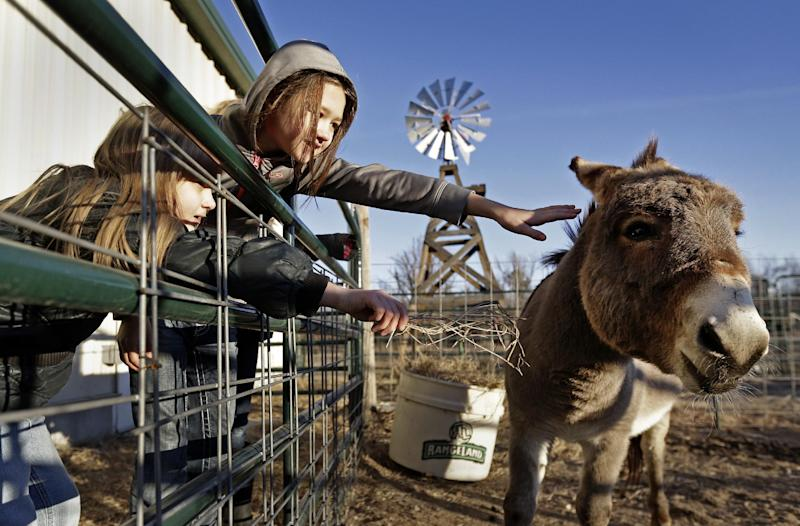 In this Thursday, Dec. 12, 2013 photo, second grader Brooklynn Black, and third grader Alice Claassen, left, look after the school's mule during morning chores at the Walton 21st Century Rural Life Center in Walton, Kan. Located in a small farming community, the school faced closing before re-establishing itself as an agriculture-focused charter school and more than doubling enrollment. (AP Photo/Charlie Riedel)