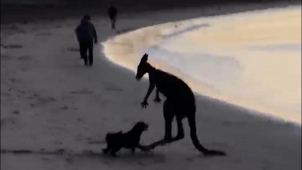 As the sun rises, a small dog can be seen attacking a kangaroo at the water's edge.