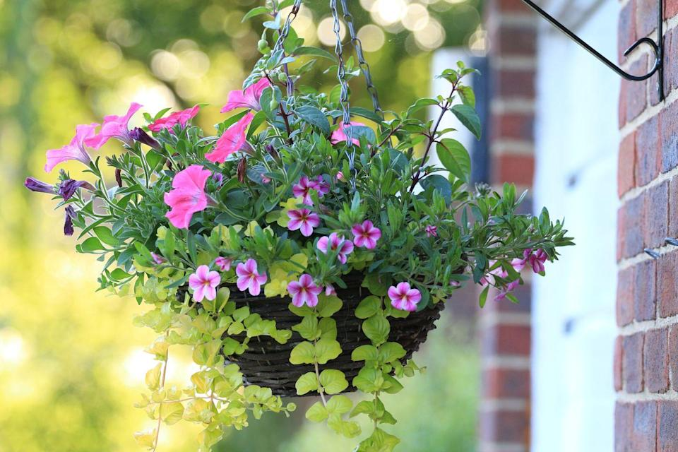 <p>Want instant colour in your garden? A really easy and inexpensive way to do this is to plant up some hanging baskets. Choose plants such as fuchsias, verbena or petunias, or you can even grow vegetables like tomatoes. </p>