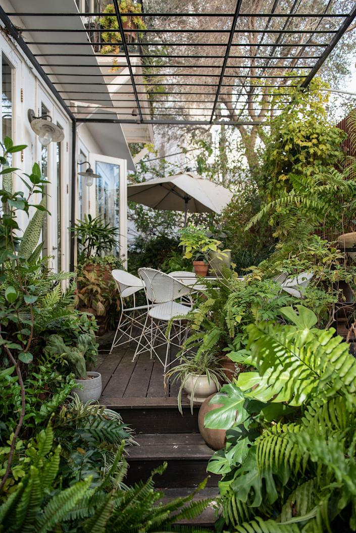 The couple's backyard is filled with ferns and shade plants; an homage to Broudoi's father's green thumb.