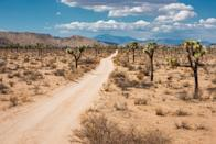 <p><strong>Let's start big picture here.</strong><br> Joshua Tree is almost extraterrestrial, with its oversized red rocks and cactus that look positively like the truffula trees from Dr. Suess books.</p> <p><strong>Any standout features or must-sees?</strong><br> Don't miss the Cholla Cactus Garden, where the iconic plants stretch on as far as the eye can see. Or sunset at Ryan Mountain, one of the highest points in the park, but be sure to bring a flashlight for your route down, it's a bit of a hike.</p> <p><strong>Was it easy to get around?</strong><br> There's a great Visitor's Center with maps of various trails to help you navigate. You can definitely do a drive through for the standard National Park fee, if you're not up for a walk or hike though.</p> <p><strong>All said and done, what—and who—is this best for?</strong><br> If you even have the slightest leaning towards natural beauty, J-Tree is a must-visit in your lifetime.</p>