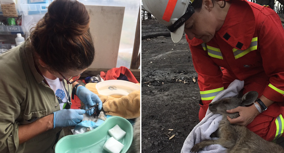 Split screen. Left - Dr Natasha Bassett treats an animal inside a surgery. Right - Dr Bassett treats a wallaby in the field. She wears a helmet and hi-vis clothing.