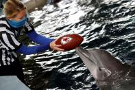 FILE PHOTO: NFL: Super Bowl LV-Rescued Dolphin Predicts Winner