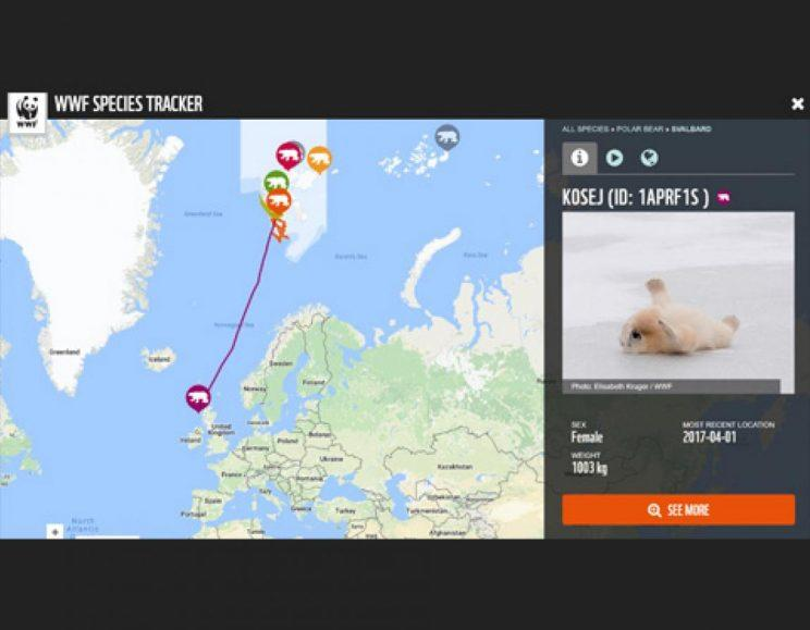 No, this polar bear tracker isn't real (Picture: WWF)