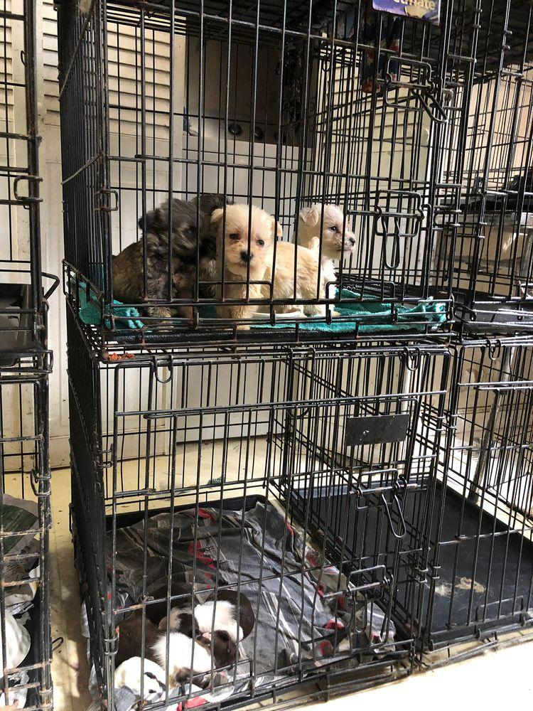 More than 80 Dogs, Including Days-Old Puppies, Rescued from