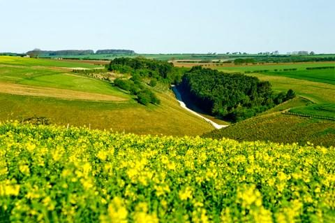 The Yorkshire Wolds - Credit: getty