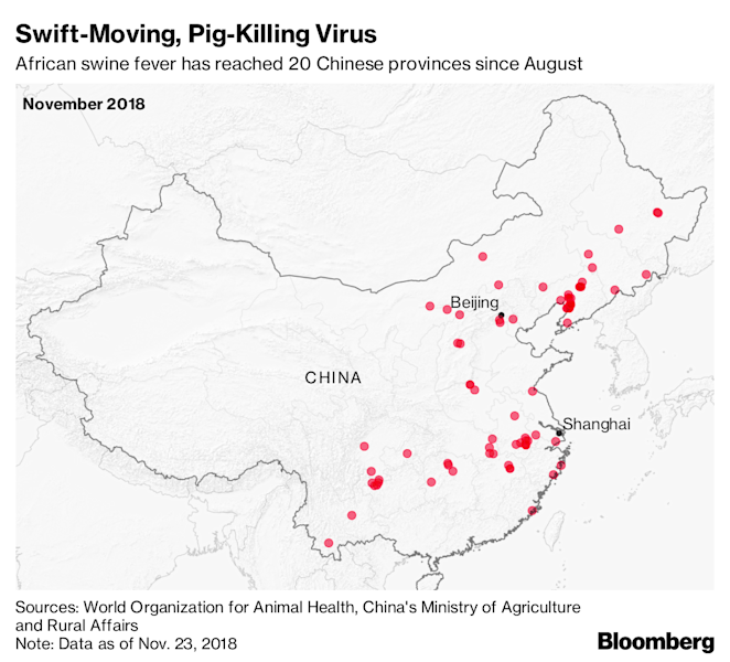 How China Can Save Its Pigs From Annihilation: Be Like Russia