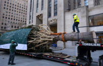 A worker walks across the trunk of the 2020 Rockefeller Center Christmas tree, a 75-foot tall Norway Spruce that was acquired in Oneonta, N.Y., as it is prepared for setting on a platform at Rockefeller Center Saturday, Nov. 14, 2020, in New York. (AP Photo/Craig Ruttle)e)