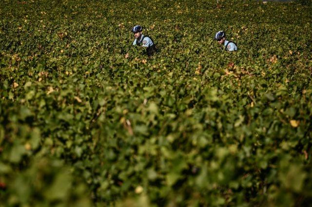 Cop au vin: French police on patrol to protect vineyards