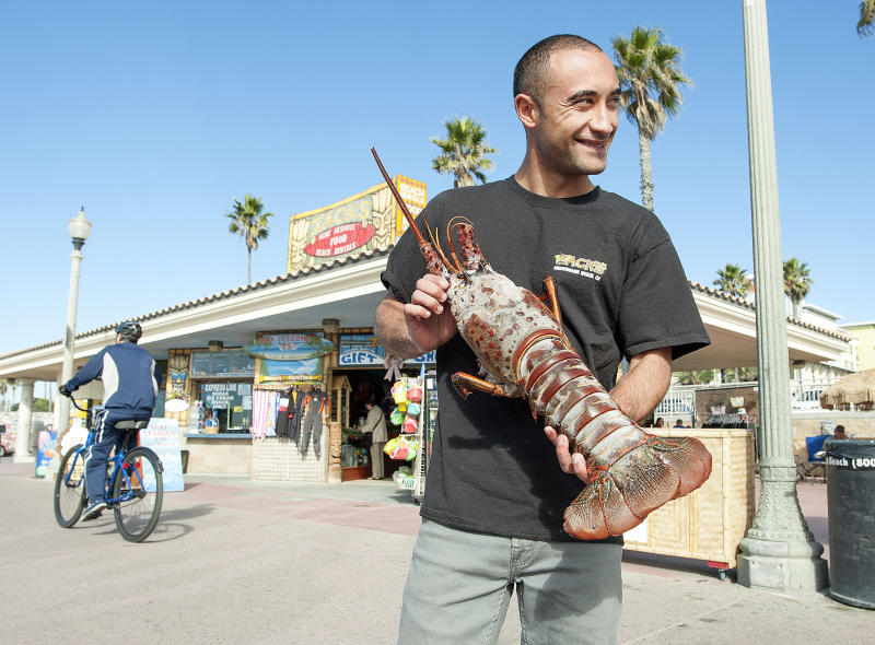 Joseph Ali, 27, of Huntington Beach shows off an 18 pound California spiny lobster he caught with his hands while free diving, without tanks, near the pier Monday night Dec. 9, 2013. (AP Photo/The Orange County Register, Ken Steinhardt)