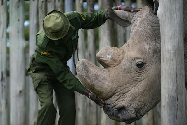 A caregiver calms Sudan.