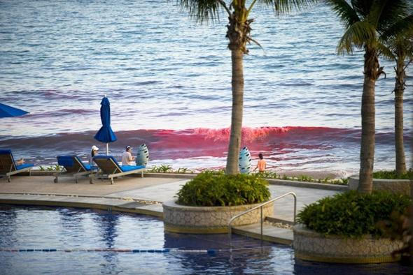 Holidaymakers panic as sea turns blood red