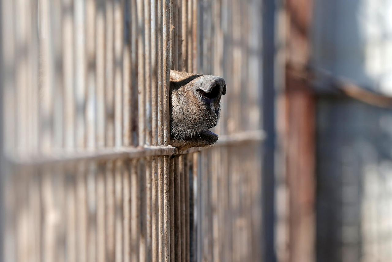 <p>A bear is seen in the cage of Nour Park at Mosul's zoo, Iraq, Feb. 2, 2017. (Photo: Muhammad Hamed/Reuters) </p>