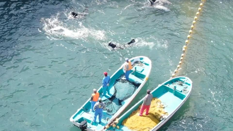 Two boats are in the bottom right corner. Men in wetsuits in the water. A splash where the dolphin is.