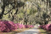 """<p><a href=""""https://www.bonaventurehistorical.org/"""" rel=""""nofollow noopener"""" target=""""_blank"""" data-ylk=""""slk:Bonaventure Cemetery"""" class=""""link rapid-noclick-resp"""">Bonaventure Cemetery</a>, established in 1846, is located in one of the most haunted cities in the country. </p><p>But cemetery or not, it's a breathtaking sight with weeping willows and flowers throughout. Most tourists will stop for tours held on the weekends, or for a picnic. For adults only, there also is a <a href=""""https://blueorbtours.com/"""" rel=""""nofollow noopener"""" target=""""_blank"""" data-ylk=""""slk:Zombie Ghost Tour"""" class=""""link rapid-noclick-resp"""">Zombie Ghost Tour</a>.<br></p>"""