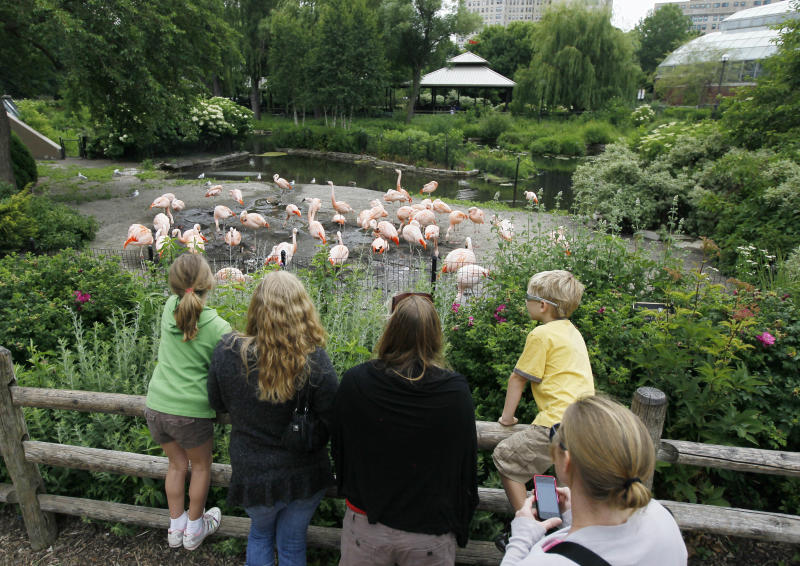 In this Wednesday, June 13, 2012, photo, a group of children admire the flamingos at Chicago's Lincoln Park Zoo. Visitors flock to the 49-acre zoo a few miles north of downtown Chicago where the admission is free and it's open year round. (AP Photo/Charles Rex Arbogast)