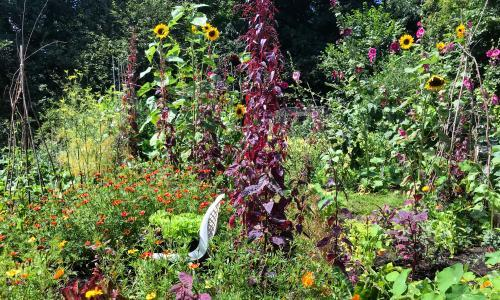 A last-minute planting spree to hold back the tide of autumn