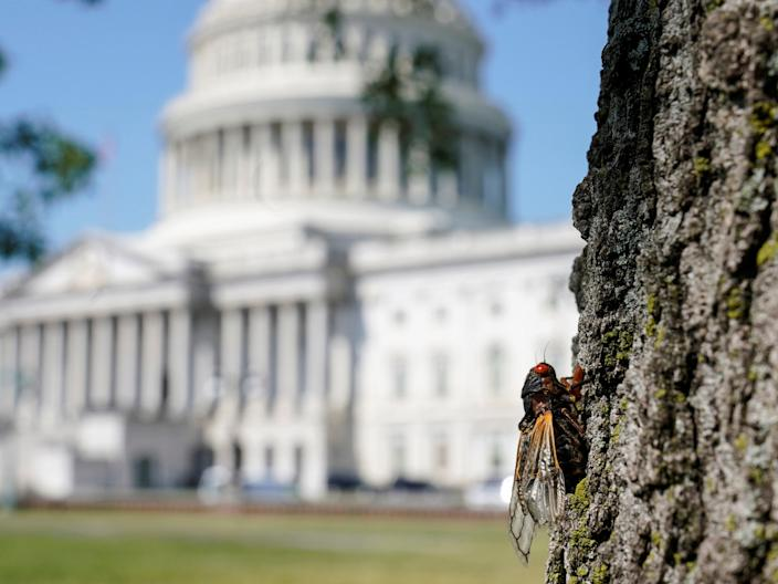 <p>Cicadas inside the engines caused a five hour delay to the press flight from Washington</p> (REUTERS)