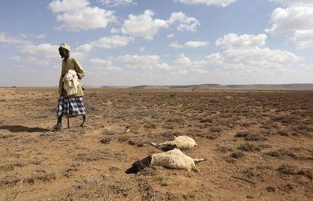 A man walks past the carcass of sheep that died from the El Nino-related drought in Marodijeex town of southern Hargeysa, in northern Somalia's semi-autonomous Somaliland region, April 7, 2016. REUTERS/Feisal Omar/File Photo