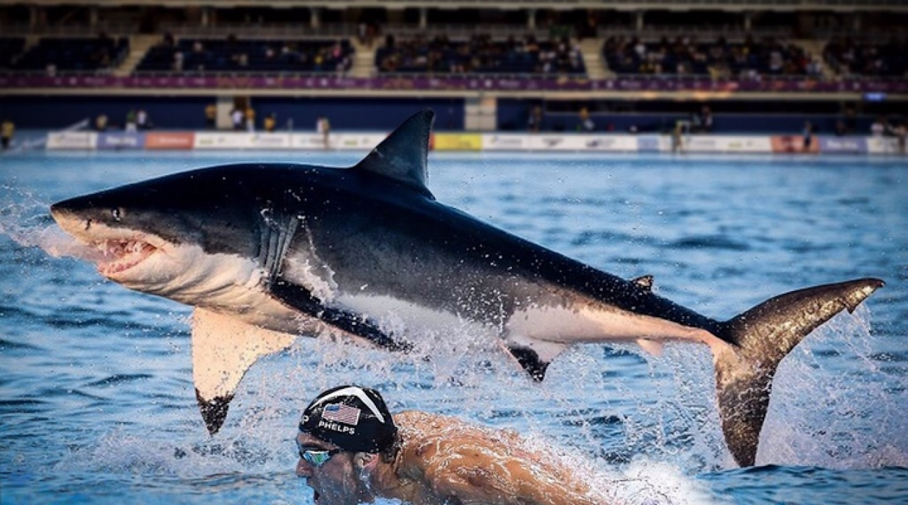 "<p>Discovery has released the first official trailer for Olympic gold medalist Michael Phelps' race against a great white shark.</p><p>The race will be broadcast at 8 p.m. ET on July 23 and has been titled ""Phelps vs. Shark: The Battle for Ocean Supremacy.""</p><p>""The Great White Shark meets the Greatest of All-Time,"" the dramatic voiceover says.</p><p>Watch the trailer below:</p><p>Phelps will also make an appearance on the network's ""Shark School with Michael Phelps"" on July 30.</p>"