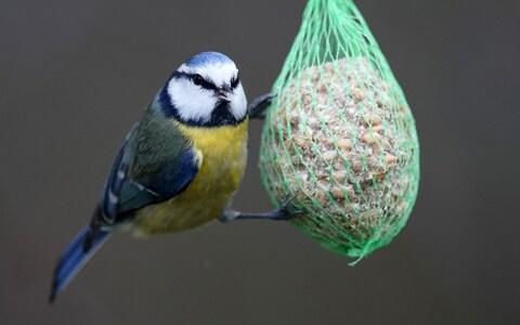 Our gardens have become havens for small birds as we leave out food for them - Credit: RONALD WITTEK/EPA-EFE/REX