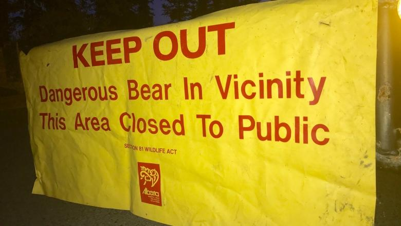 Wildlife officers looking for grizzly bear roaming southwest Calgary