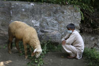 Ali Mohd Sofi, who survived in a wild bear attack feeds his sheep outside his home on the outskirts of Srinagar, Indian controlled Kashmir, Thursday, Aug . 8, 2019. Amid the long-raging deadly strife in Indian-controlled Kashmir, another conflict is silently taking its toll on the Himalayan region's residents: the conflict between man and wild animals. According to official data, at least 67 people have been killed and 940 others injured in the past five years in attacks by wild animals in the famed Kashmir Valley, a vast collection of alpine forests, connected wetlands and waterways known as much for its idyllic vistas as for its decades-long armed conflict between Indian troops and rebels. (AP Photo/Mukhtar Khan)