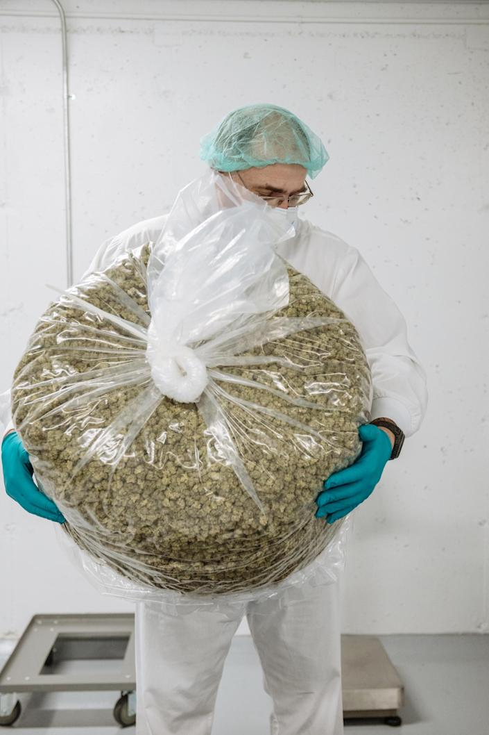 <p>A worker holds a bag of manicured buds at the CannTrust Holdings Inc. cannabis production facility in Fenwick, Ontario, Canada, on Monday, Oct. 15, 2018. (Photo: Galit Rodan/Bloomberg via Getty Images) </p>