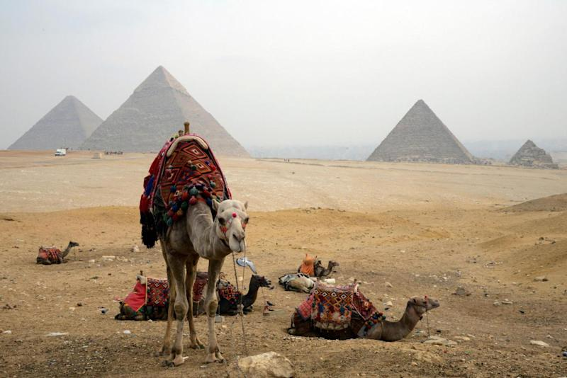A caravan of camels sitting across the Giza plateau (AFP/Getty Images)