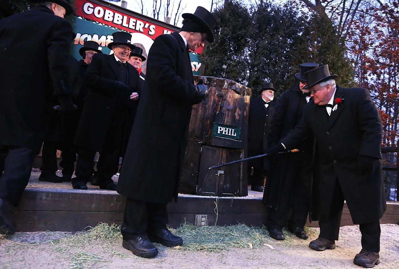 PUNXSUTAWNEY, PA - FEBRUARY 02:  President Bill Deeley (R) of Punxsutawney's 'Inner Circle' tap on the door of Punxsutawney Phil's burrow as he and groundhog co-handlers John Griffiths (2nd R) and Ron Ploucha (3rd L) entice Phil out during the 127th Groundhog Day Celebration at Gobbler's Knob on February 2, 2013 in Punxsutawney, Pennsylvania. The Punxsutawney 'Inner Circle' claimed that there were about 35,000 people gathered at the event to watch Phil's annual forecast. Phil did not see his shadow and predicting an early spring. (Photo by Alex Wong/Getty Images)