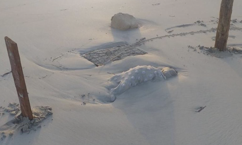 A toddler's body embedded in the sand after washing up on a beach in Libya.