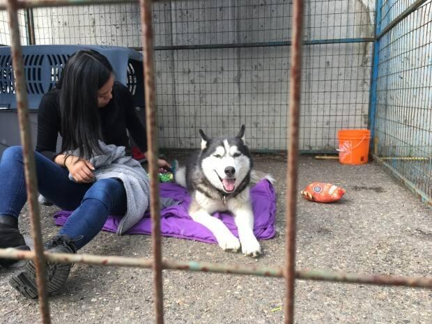 The B.C. SPCA's two new emergency units can be deployed to help pets in emergency situations when their owners have to evacuate their homes. Photo depicts a B.C. SPCA volunteer sitting with a pet separated from its owner during a previous wildfire season.   (B.C. SPCA - image credit)