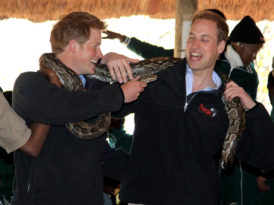 <p>During a trip to The Mokolodi Nature Reserve in Botswana in June 2010, the brothers got up close and personal with a five-metre African Rock Python. <em>[Photo: Getty]</em> </p>