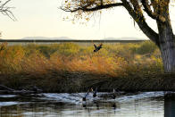 Wild ducks fly through a marsh area as the top of a newly erected border wall cuts through the San Bernardino National Wildlife Refuge, Tuesday, Dec. 8, 2020, in Douglas, Ariz. Construction of the border wall, mostly in government owned wildlife refuges and Indigenous territory, has led to environmental damage and the scarring of unique desert and mountain landscapes that conservationists fear could be irreversible. (AP Photo/Matt York)