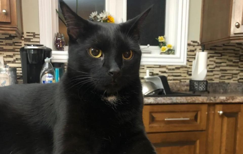 A cat in Newfoundland saved his owner's house by waking him when the crock pot was on fire. (Photo: Courtesy of Scott White)