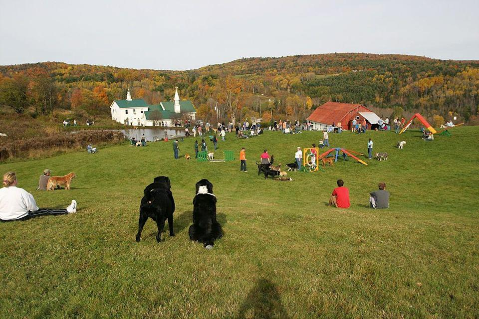 """<p><a href=""""http://www.npr.org/2015/05/31/410536722/at-vermonts-dog-mountain-comfort-and-community-for-pet-lovers"""" rel=""""nofollow noopener"""" target=""""_blank"""" data-ylk=""""slk:The World's Only Dog Chapel"""" class=""""link rapid-noclick-resp"""">The World's Only Dog Chapel</a> is a must-visit for anyone who has known and loved a pooch of their own. Built in 1997, the chapel was built as a way to reflect on the relationship between people and dogs. Its walls are filled with notes and photos of dearly departed pooches. It's a good cry. Outside, there's the perfect kind of rolling hills that doggy visitors will love exploring. </p>"""