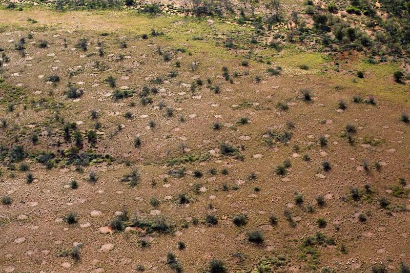 Are 'Fairy Circles' Just the 'Ghosts' of Termite Nests?