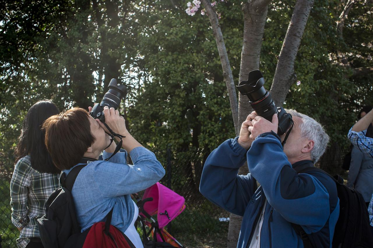 WASHINGTON, DC - APRIL 7: People photograph cherry blossoms around the Tidal Basin where cherry trees are just beginning to bloom on April 7, 2013 in Washington, DC. The blossoms are late this year, a result of a cooler than average spring. (Photo by Brendan Hoffman/Getty Images)