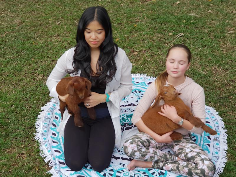 Goat meditation has arrived in Australia, debuting on the Gold Coast. Source: Supplied/BerTan