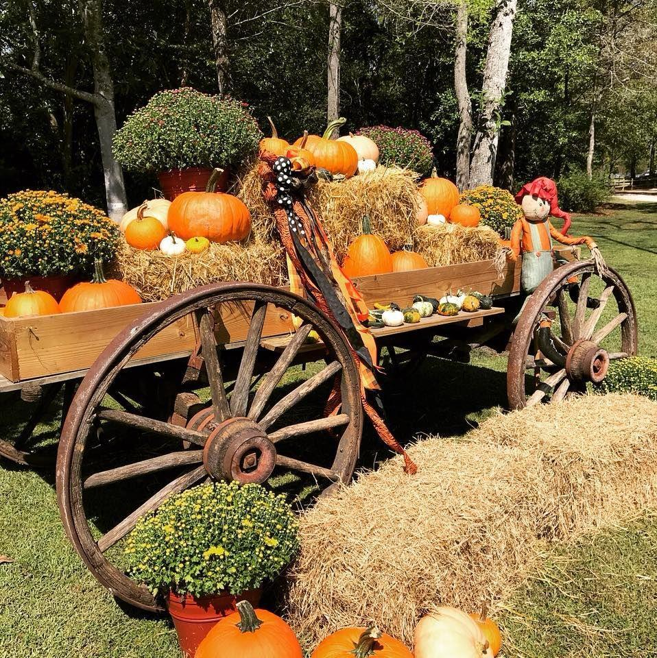 """<p>Pick pumpkins, then enjoy a meal at the fantastic, down-home restaurant at <a href=""""https://www.mikesfarmnc.com/"""" rel=""""nofollow noopener"""" target=""""_blank"""" data-ylk=""""slk:Mike's Farm"""" class=""""link rapid-noclick-resp"""">Mike's Farm</a>—or enjoy a hayride! You and your kids can also spend some time with the farm animals here. There's so much to do at this gorgeous farm, which offers event space for weddings and large parties as well. </p><p><a class=""""link rapid-noclick-resp"""" href=""""https://go.redirectingat.com?id=74968X1596630&url=https%3A%2F%2Fwww.tripadvisor.com%2FAttraction_Review-g48959-d7789318-Reviews-Mike_s_Farm-Beulaville_North_Carolina.html&sref=https%3A%2F%2Fwww.countryliving.com%2Flife%2Ftravel%2Fg21273436%2Fpumpkin-farms-near-me%2F"""" rel=""""nofollow noopener"""" target=""""_blank"""" data-ylk=""""slk:PLAN YOUR TRIP"""">PLAN YOUR TRIP</a></p>"""