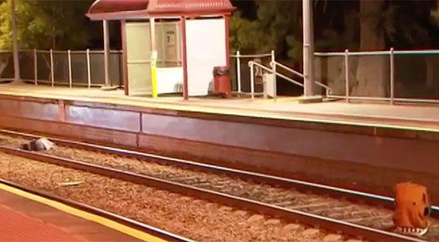 The intoxicated teenagers were laying in the middle of the train tracks. Photo: 7 News