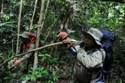 Indonesian rangers dismantle traps to save wildlife