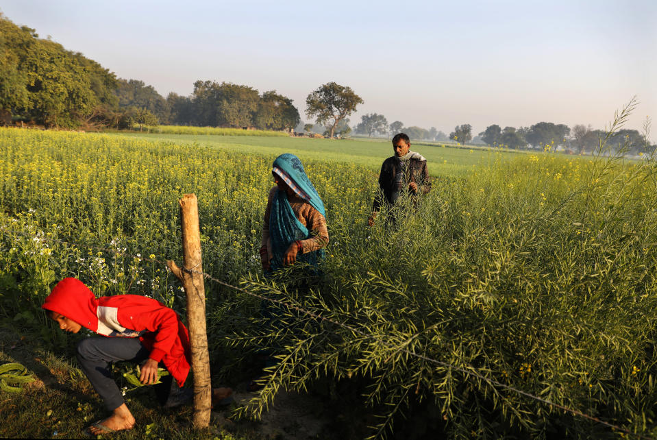 Indian farmer Ram Singh Patel, right, arrives with his wife Kantee Devi, center, and son Shivansh to work in their field in Fatehpur district, 180 kilometers (112 miles) south of Lucknow, India, Saturday, Dec. 19, 2020. Patel's day starts at 6 in the morning, when he walks into his farmland tucked next to a railway line. For hours he toils on the farm, where he grows chili peppers, onions, garlic, tomatoes and papayas. Sometimes his wife, two sons and two daughters join him to lend a helping hand or have lunch with him. (AP Photo/Rajesh Kumar Singh)