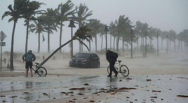 A pair of cyclists brave the elements as Irma's winds bend Fort Lauderdale's palm trees. Photo: AP