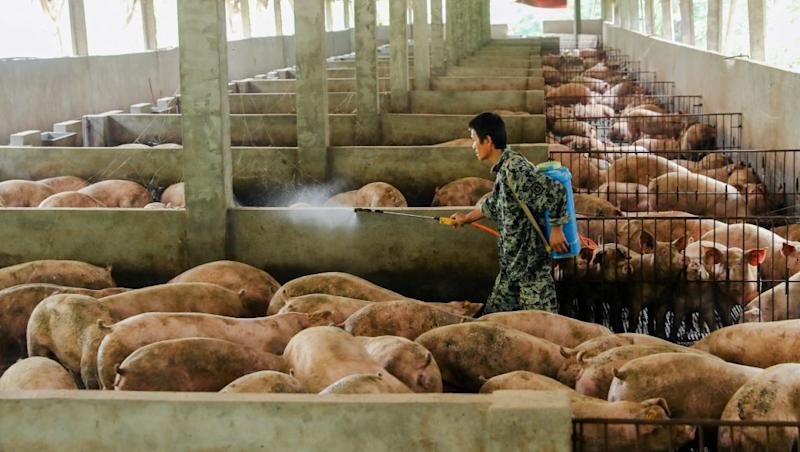 A man disinfects a pig farm in Guangan, Sichuan province, China August 27, 2019.