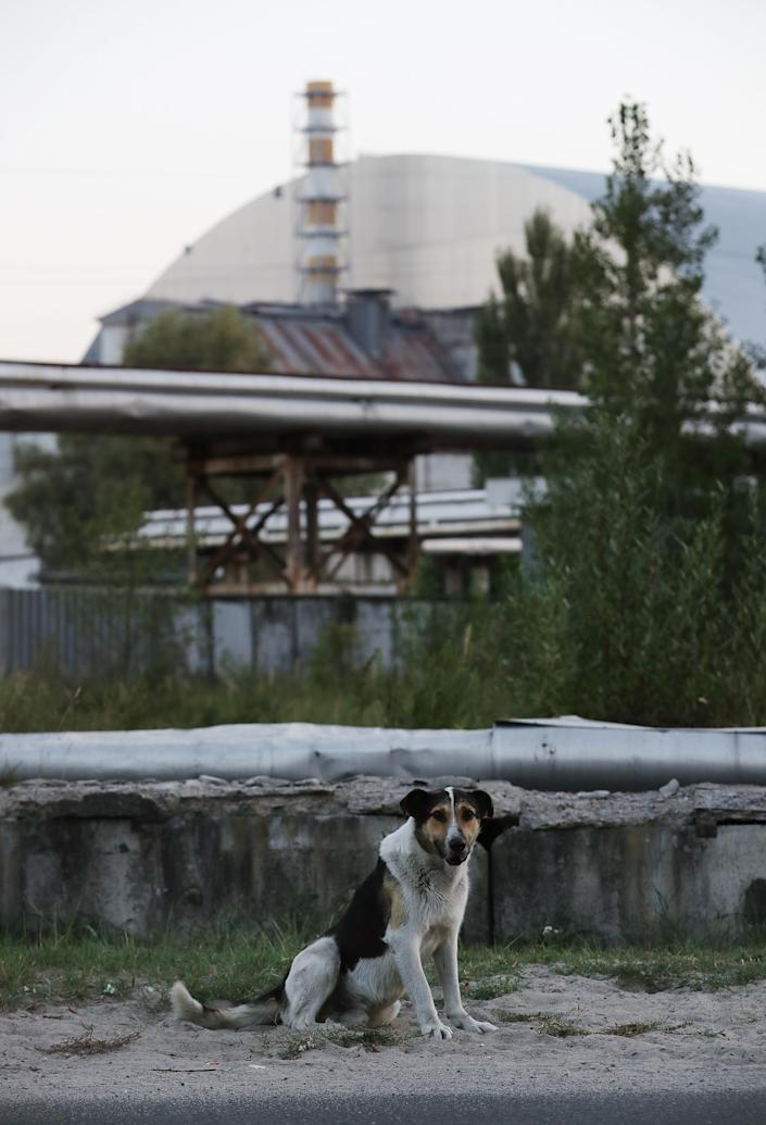 <p>A stray dog stands near the new, giant enclosure that covers devastated reactor number four at the Chernobyl nuclear power plant on Aug. 17, 2017, near Chernobyl, Ukraine. (Photo: Sean Gallup/Getty Images) </p>