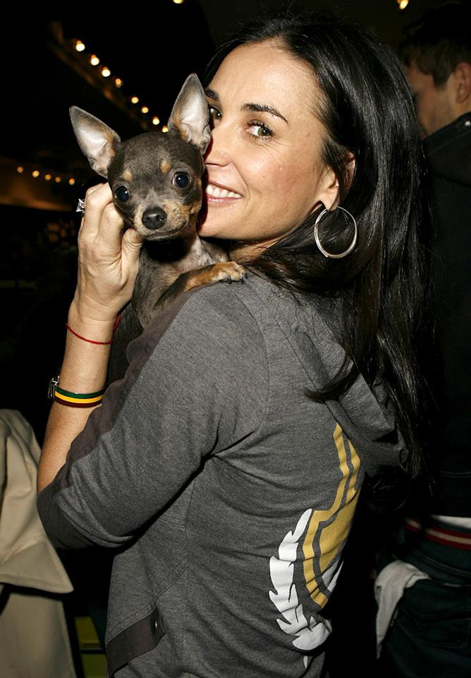 "Demi Moore's dog Vida Blue loves the camera. Jeff Vespa/<a href=""http://www.wireimage.com"" target=""new"">WireImage.com</a> - February 19, 2006"