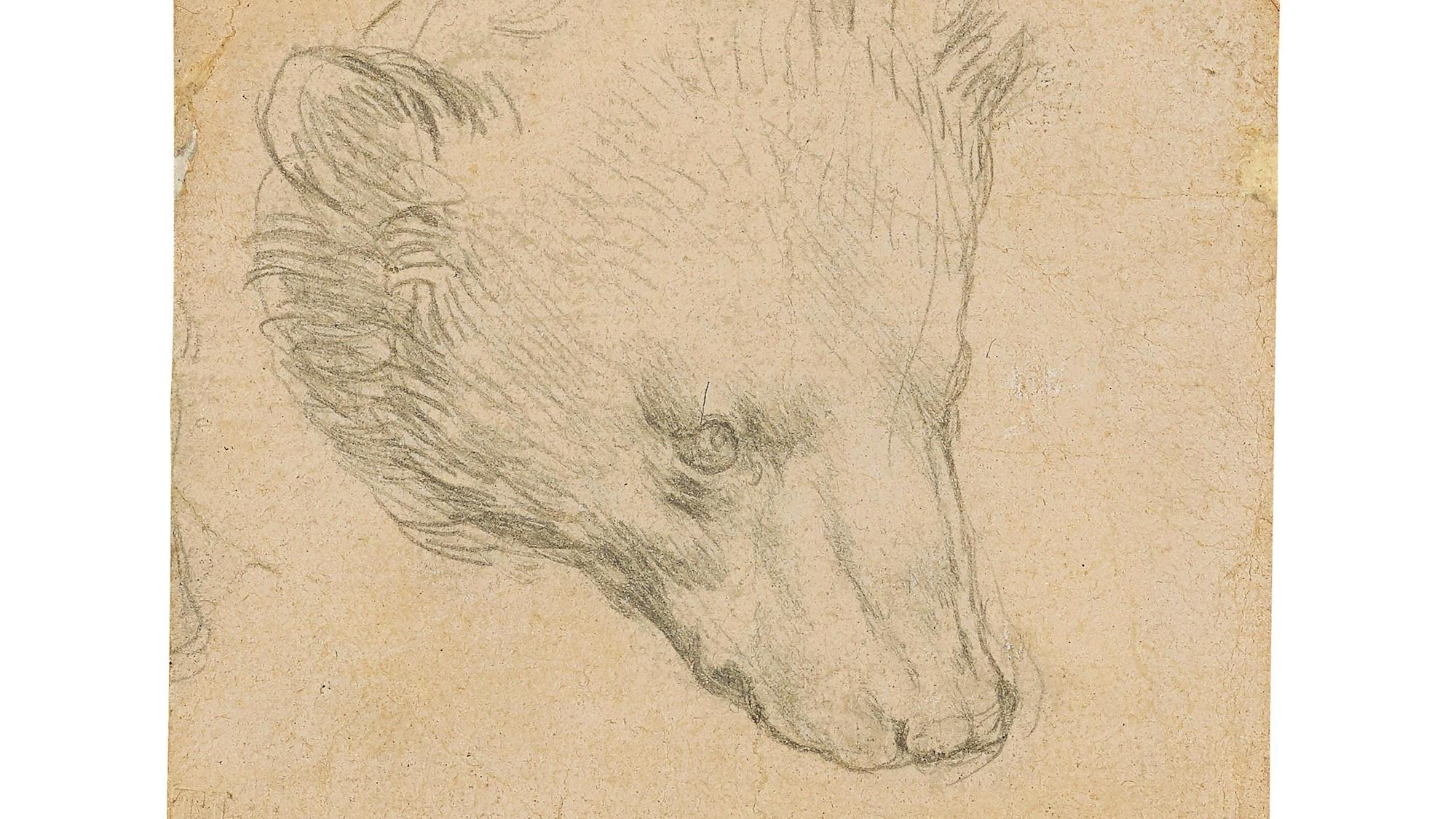 Leonardo da Vinci drawing expected to fetch up to £12m at auction