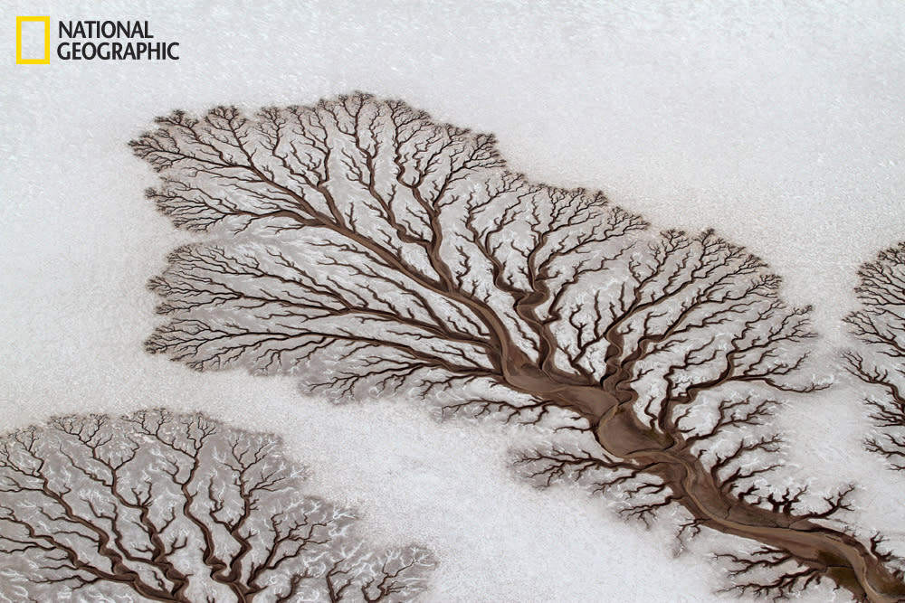 Rivers forming tree-like figures on the desert of Baja California, Mexico. Photograph courtesy Adriana Franco/National Geographic Your Shot.